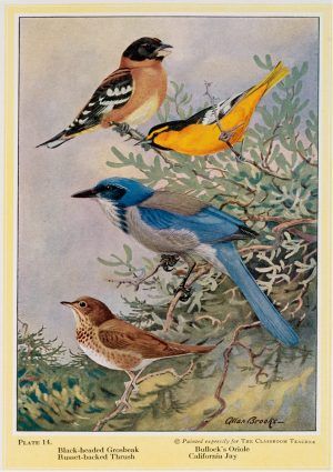 Birds | Vintage Retro Poster | Colour Factory Editions