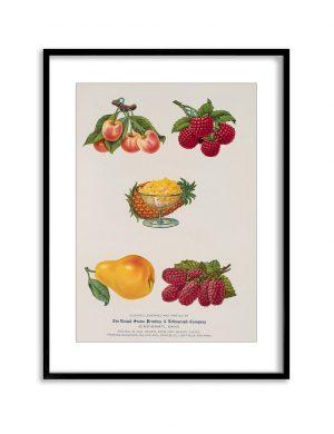 Fruit Salad | Vintage Retro Poster | Colour Factory Editions