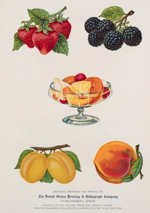 Fruit of the Forrest | Vintage Retro Poster | Colour Factory Editions