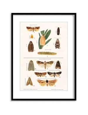 Moths | Vintage Retro Poster | Colour Factory Editions