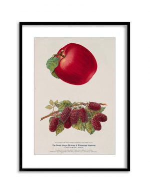 Red Fruits | Vintage Retro Poster | Colour Factory Editions